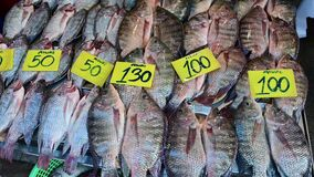 4K Tilapia fishes still alive fresh in metal tray for sell at flea market
