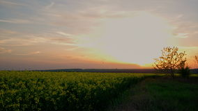 4k Time lapse of a beautiful sunset over a field of seed stock video footage