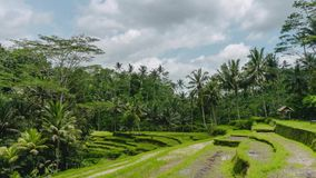 Ubud rice field terrace in Bali Indonesia on a partly cloudy sunny day