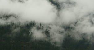 4k timelapse mountain mist rising in the morning,fog trees,Bomi County,tibet. 4k time lapse of mountain mist rising in the morning,fog pine trees,such as stock video