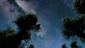 4K TIme Lapse of Stars and Silhouetted Pine Trees stock video