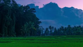 Clouds at sunset timelapse over large tropical trees and rice fields on the island of Bali in Indonesia. 4K Timelapse in Bali Island, indonesia stock footage