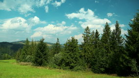4K Timelapse of clouds and beautiful green coniferous trees stock footage