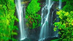4K timelapse De hoge ongeveer 80 meters van de Sekumpulwaterval of 262 voet lang Camera dichte omhooggaand 15 Juli 2015, Bali, In stock videobeelden