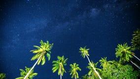 4K timelapse De sterrige hemel boven de palmen in de keerkringen, Samui-eiland, Thailand stock videobeelden