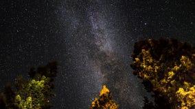4K Timelapse-film videofilm van sterren die zich in nachthemel over pijnboombomen tijdens de douche van de perseidmeteoor bewegen stock footage