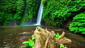 4K Timelapse. Old tree close-up in the water near Munduk waterfall. 15 July 2015, Bali, Indonesia stock video