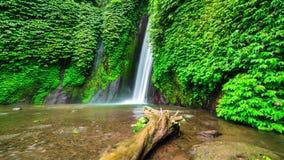 4K Timelapse. Old tree in the water near Munduk waterfall. 15 July 2015, Bali, Indonesia stock video