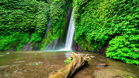 4K timelapse Oude boom in het water dichtbij Munduk-waterval 15 Juli 2015, Bali, Indonesië stock video