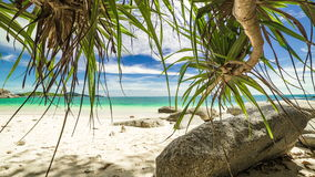 4K TimeLapse. Palm trees hanging from above on a paradise beach in Phuket stock video