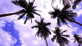 4k Timelapse palms at blue sky background  with. 4k Timelapse speed up palms at blue sky background  with clouds stock video footage