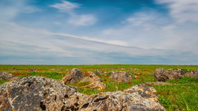 4K Timelapse. Rocky terrain with green grass and red tulips in the steppes of Kazakhstan stock video footage
