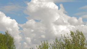 4K. Timelapse rolling clouds over trees stock video footage