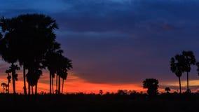 4K Timelapse, silhouet van suikerpalm in schemeringhemel stock videobeelden
