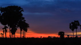 4K Timelapse, silhouette of sugar palm in twilight sky. 4K Timelapse, silhouette of sugar palm in twilight sky, Thailand stock video footage