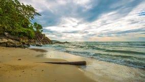 4K timelapse Stary drzewo na plaży chmurach nad morzem i, Koh Samui, Tajlandia zbiory wideo