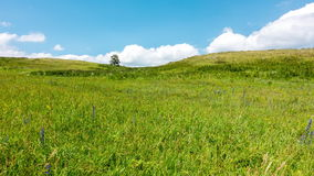 4k Timelapse yellow-green hill and sky with clouds. Wild grasses. stock footage