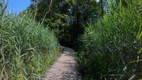 4K Tiro subjetivo en el movimiento de una persona que camina en los lagos Plitvice metrajes