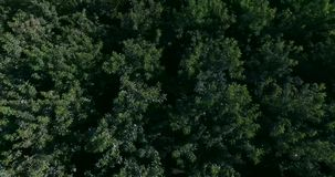 4K top view of the forest stock video