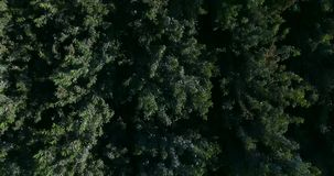 4K top view of the forest stock video footage