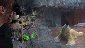 4k, touristes de personnes semblent la nourriture d'ours blanc et de viande dans le zoo banque de vidéos