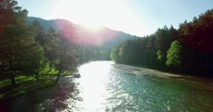4k UHD aerial view. Low flight over fresh cold mountain river at sunny summer morning. Green trees and sun rays on horisont stock video