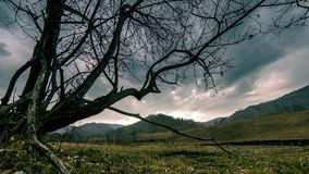 Time lapse of death tree and dry yellow grass at mountian landscape with clouds and sun rays. Horizontal slider movement. 4K UHD time lapse of death tree and stock video footage