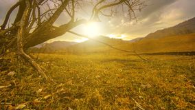 Time lapse of death tree and dry yellow grass at mountian landscape with clouds and sun rays. Horizontal slider movement. 4K UHD time lapse of death tree and stock video