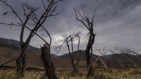 Time lapse of dead tree and dry yellow grass at mountian landscape with clouds and sun rays. Horizontal slider movement. 4K UHD time lapse of death tree and stock video