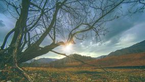 Time lapse of death tree and dry yellow grass at mountian landscape with clouds and sun rays. Horizontal slider movement. 4K UHD time lapse of death tree and stock footage
