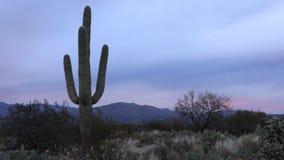 4K UltraHD Timelapse bij zonsondergang van de Sonoran-Woestijn stock videobeelden