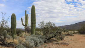 4K UltraHD Timelapse view of the Sonoran Desert stock video footage
