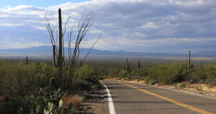 4K UltraHD View of roadside in Tucson Mountain Park stock video footage