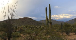 4K UltraHD Vista view in Tucson Mountain Park. 4K UltraHD A Vista view in Tucson Mountain Park stock footage