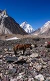 K2 und breite Spitze von Concordia in den Karakorum-Bergen stockfotos