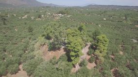 4K ungraded Aerial view of olive tree field in Zakynthos Zante island, in Greece - Log. 4K ungraded Aerial view of olive tree field in Zakynthos Zante island in stock video