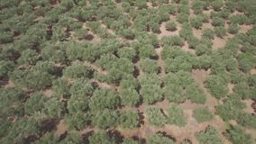 4K ungraded Aerial view of olive tree field in Zakynthos Zante island, in Greece - Log. 4K ungraded Aerial view of olive tree field in Zakynthos Zante island in stock video footage