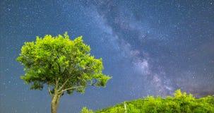 4k van de de maniernacht van de pruimboom Melkachtige de hemel dalende sterren stock footage