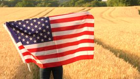 Woman holding an American USA Stars and Stripes flag in a wheat field at sunset or sunrise. 4K video clip of mixed race African American girl teenager female stock video