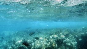 4k footage of coral fishes swimming around dead coral at red sea. 4k video of coral fishes swimming around dead coral at red sea stock footage