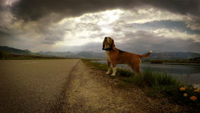 4K Video: Lightning strikes while beagle's on the walk
