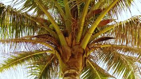 4K video of palm tree on sandy beach in tropical paradise. stock video footage