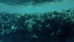 4k video van de onderzee?r van mooie onderwaterlandschappen wordt gemaakt dat Koraalrif en zwemmende tropische vissen stock footage