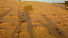 4K video van Kameelschaduwen op de duinen in Afrika stock footage