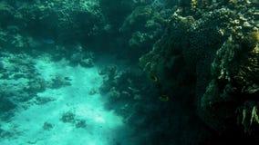 4k video van mooie koraalriffen op de overzeese bodem Kleurrijke vissen die rond zwemmen stock footage