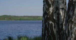 4k - vidoeiro bonito em uma grama verde densa perto de um lago vídeos de arquivo