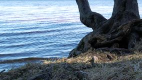 4K view of a small bay on the beautiful lake with a tree behind. stock video footage