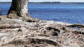 4K view of a small bay on the beautiful lake with a tree behind. stock footage