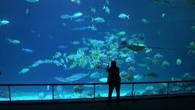 4k, visitantes silueteados en el acuario llenado de los pescados, tiburones y rayo de manta almacen de video