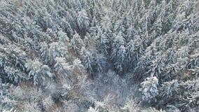 4K Vlucht boven licht de winterbos bij sneeuwval op het noorden, luchtpanorama stock video